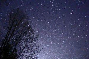 512px-Night_Sky_Stars_Trees_02